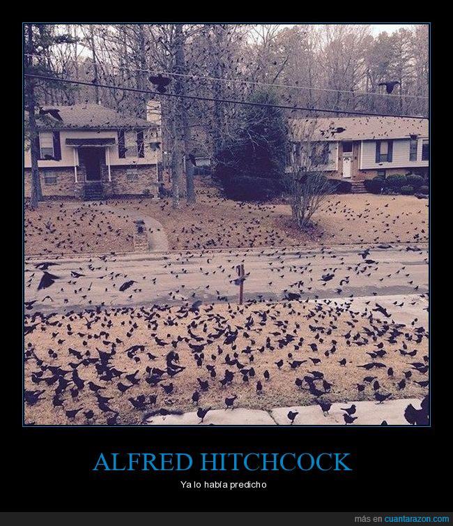 aves,cuervos,hitchcock,muchos,pajaros