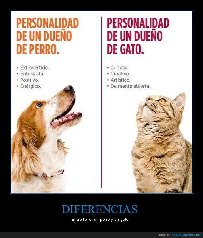 gatos,perros,personalidad
