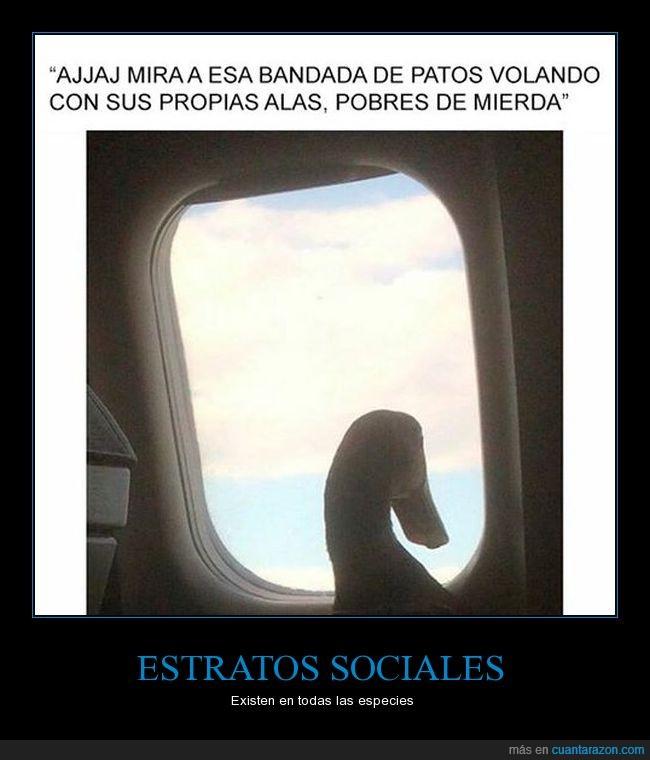avión,clase alta,pato,volar