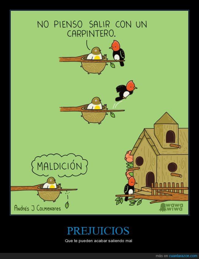 birds,carpintero,casita,pajarillos