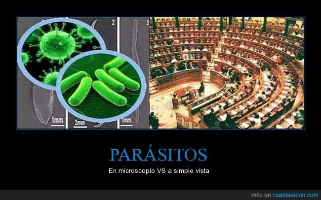 microscopio,parásitos,parlamento,políticos,simple vista