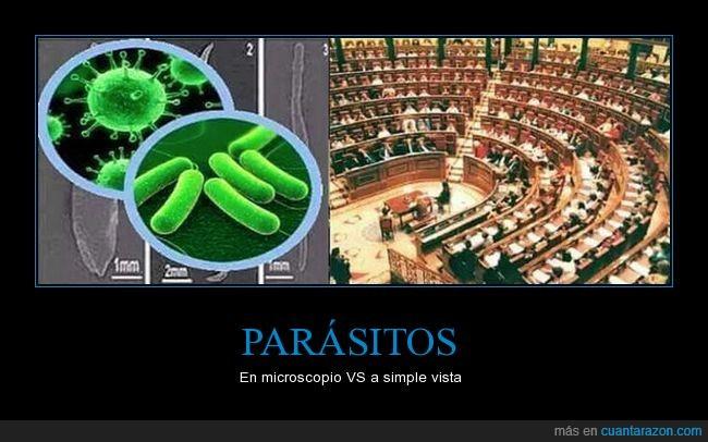 microscopio,parásitos,parlamento,políticos,simple vista
