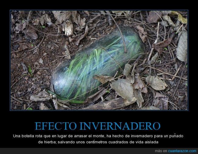 bosque,botella,invernadero