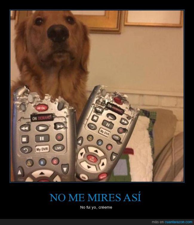 control,perro,romper,wow