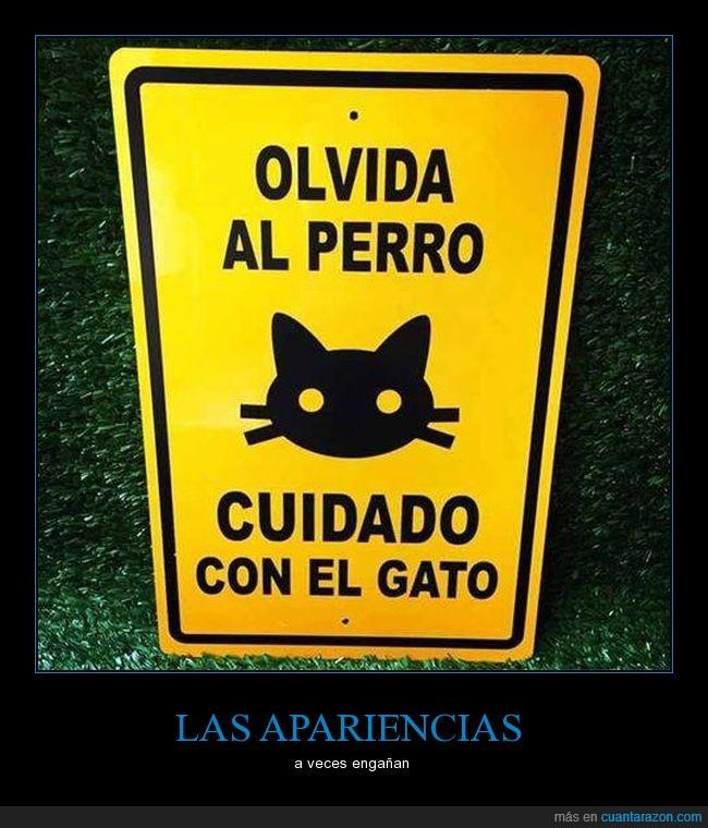 cartel,gato
