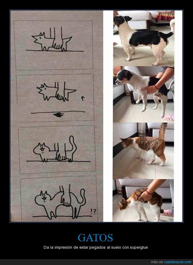 cargar,es imposible hacerlo con un gato,gato,perro,superglue