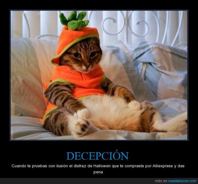 disfraz,gato,halloween,zanahoria