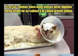 Enlace a  Conoce la historia de Sir Thomas, el gato al que le vertieron ácido en la cabeza