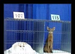 Enlace a 15 Publicaciones sobre gatos en Tumblr de las que es imposible no reírse