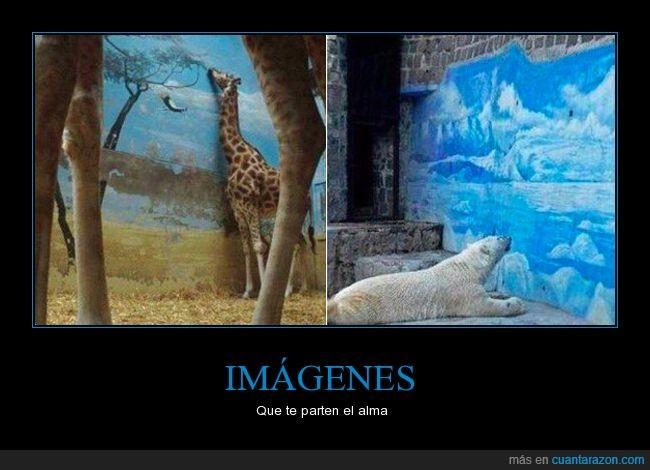 decorado,jirafa,oso polar,triste,zoo