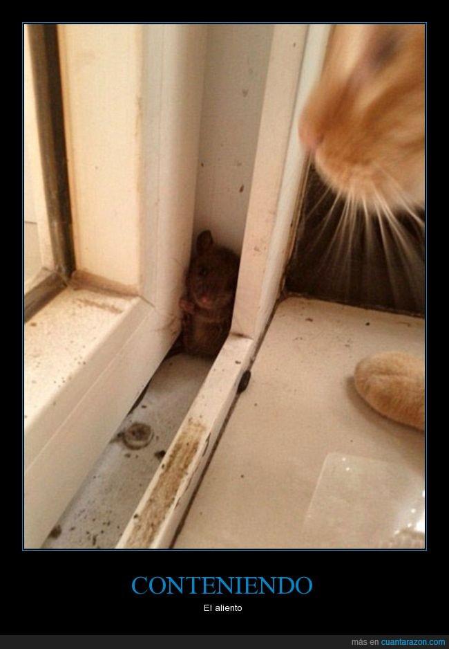 felino,Gato,ratón,roedor