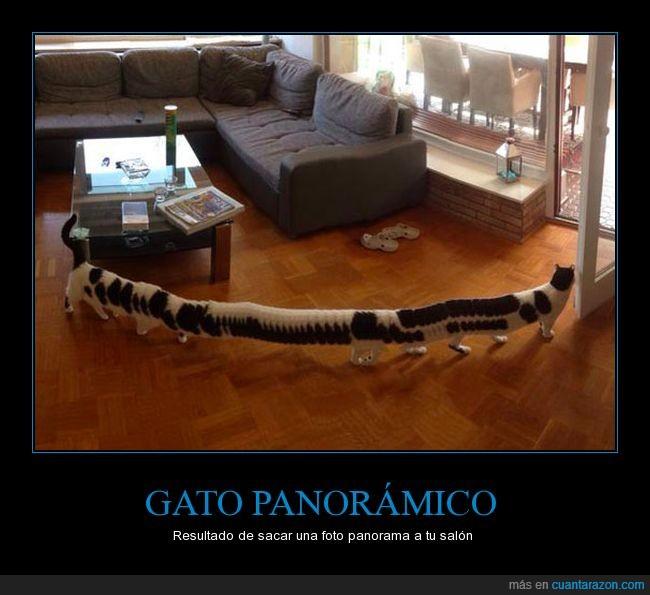 gato,largo,long cat,panorámico