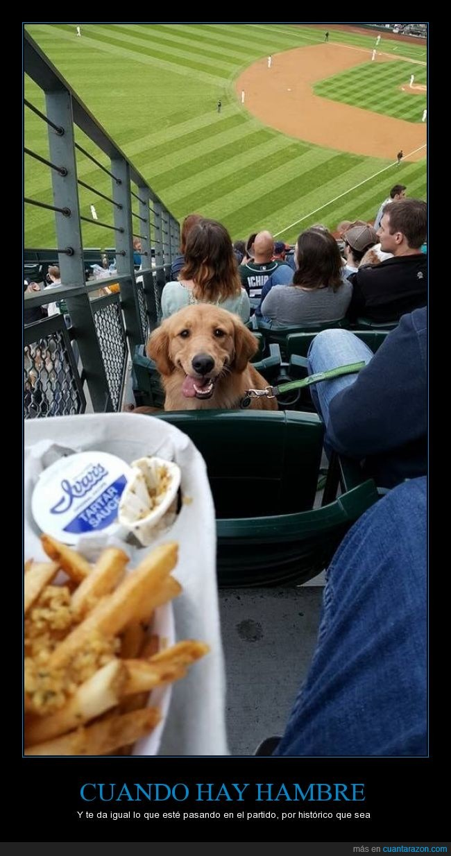 Base Ball,can,comida,diamante,juego,perro