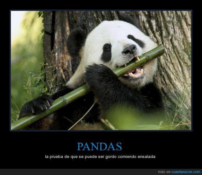 bambú,ensalada,es una broma no os lo toméis al pié de la letra,panda,verde