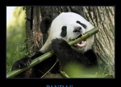 Enlace a PANDAS