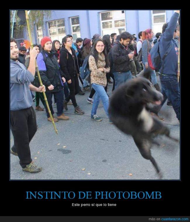 perro,photobomb,salto