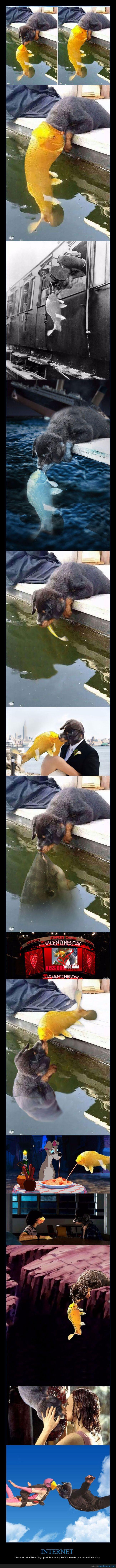 chops,montajes,perro,pez,photoshop