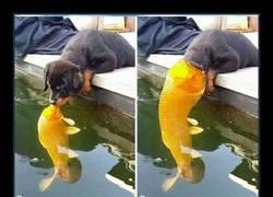 Enlace a Este perro besando a un pez inspira una nueva y épica batalla de Photoshop