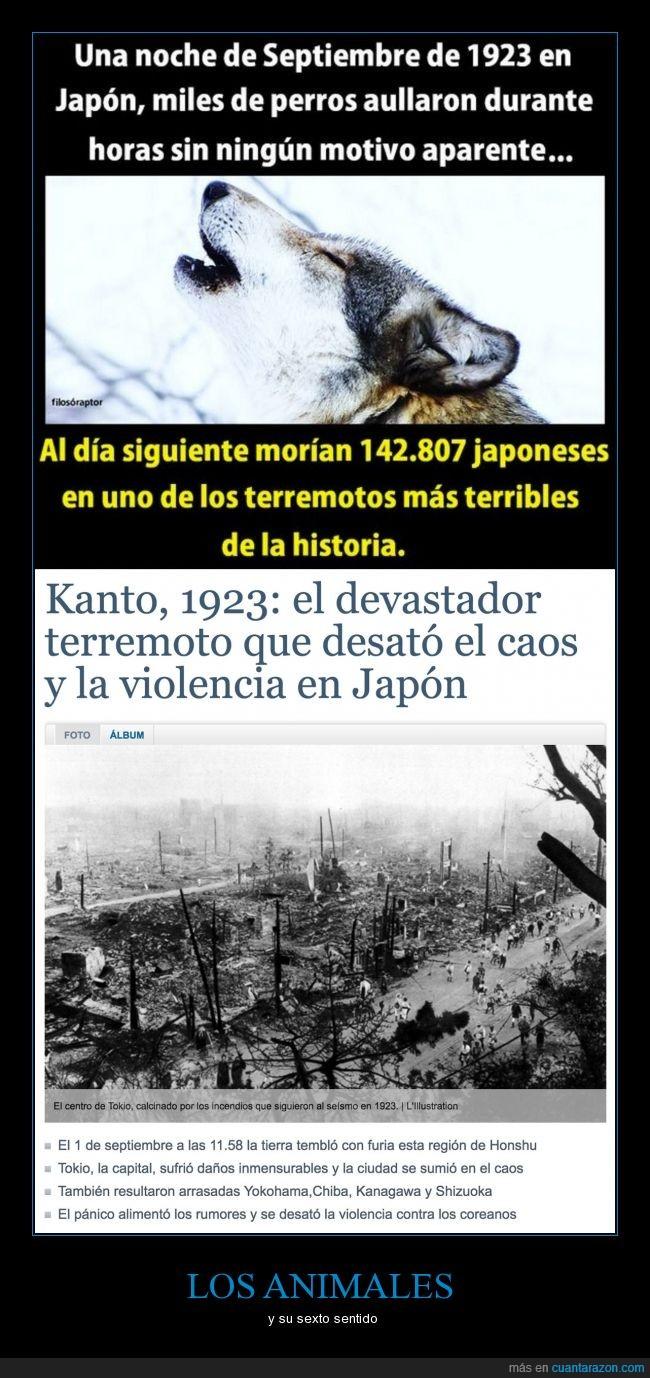 japoneses,lobos,septiembre de 1923,terremoto