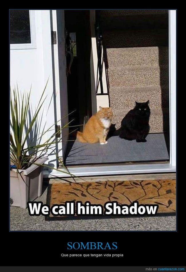 félido,felíno,gato,par,pareja,silueta,sombra