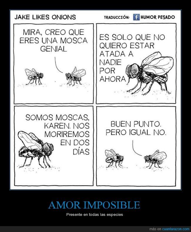 amor,karen,moscas