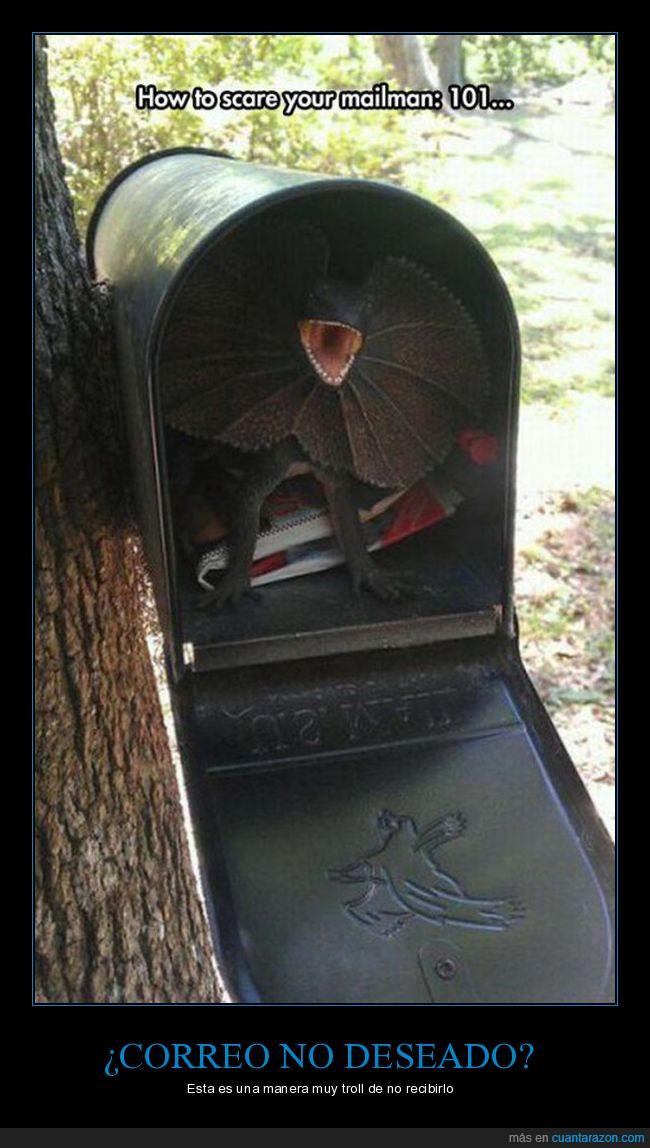 bicho,buzón,correo,reptil