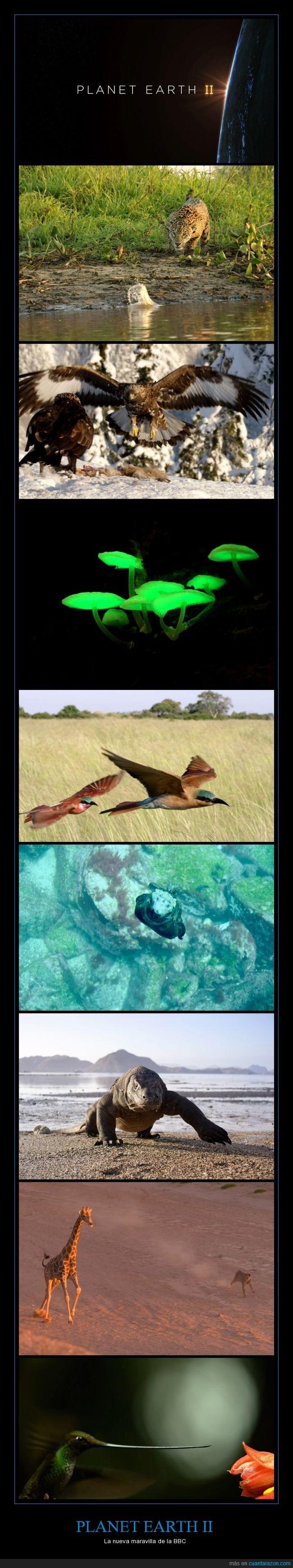 animales,bbc,belleza,documental,Naturaleza,y estas imágenes son sólo del trailer