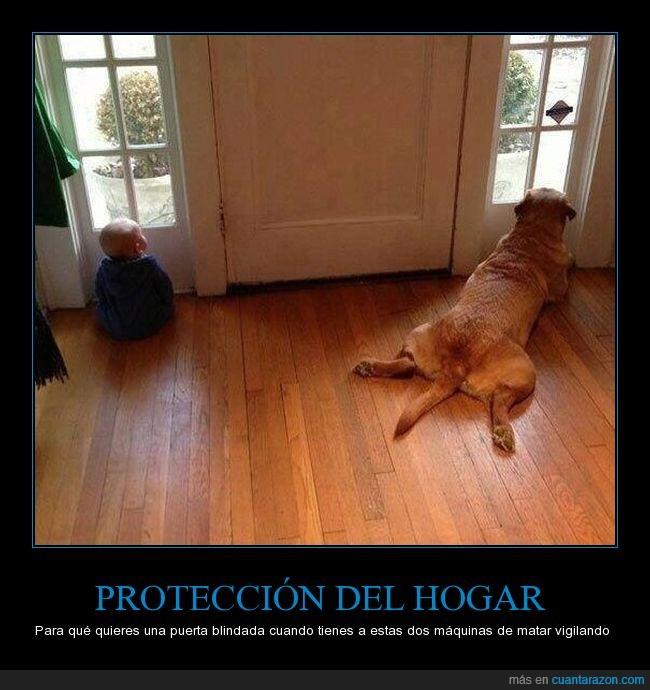 bebé,casa,perro,proteger