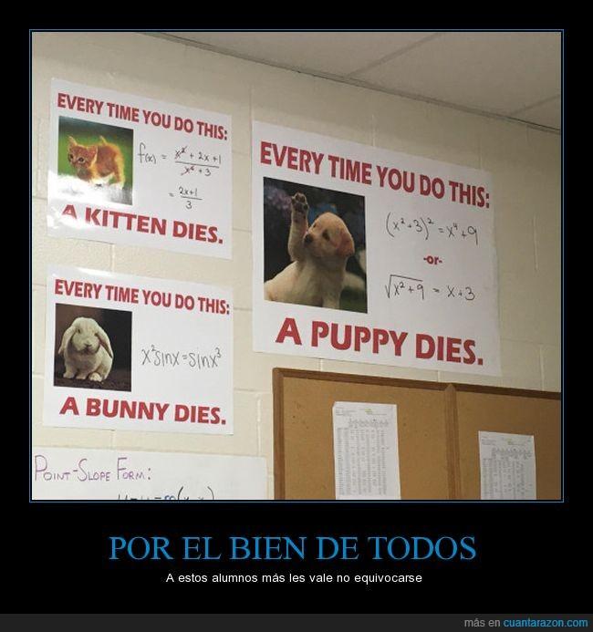 alumnos,animales,equivocación,matemáticas,muerte