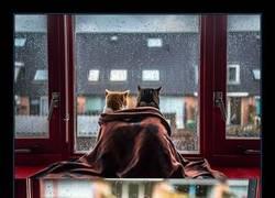 Enlace a Resumen de mis domingos en invierno