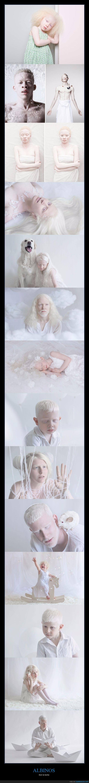 albinos,blanco,fotografía