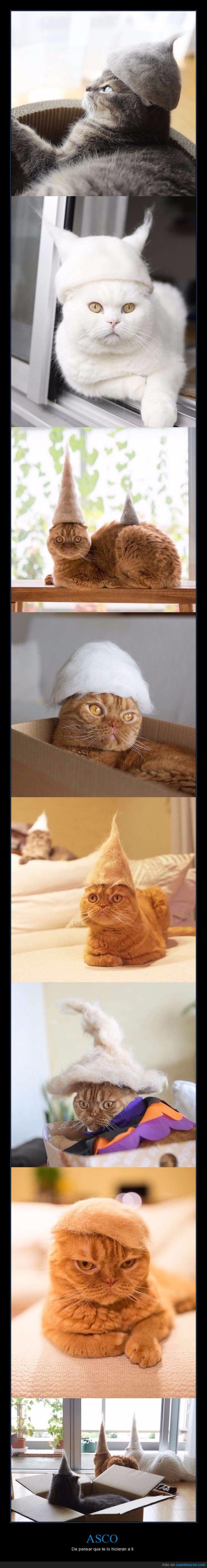 gatos,pelo,sombreros