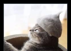 Enlace a Gatos que tienen sombreros hechos con su propio pelo
