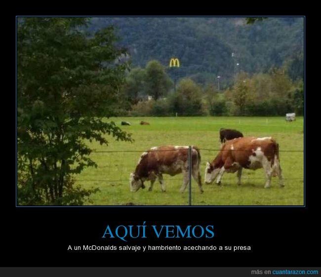comida,humor,mcdonalds,presa,vacas