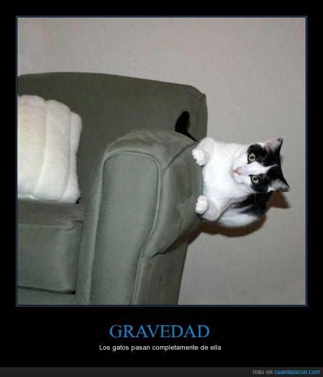 elegancia,félido,felino,fotografía,gato,gravedad