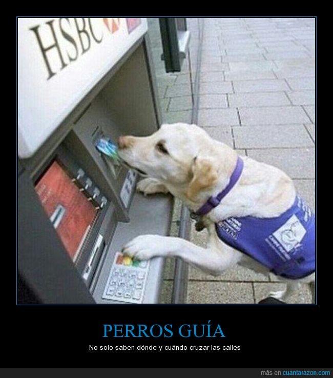 cajero,can,guia,lazarillo,perro,tarjeta