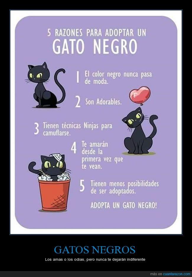 adoptar,gato negro,motivos,razones