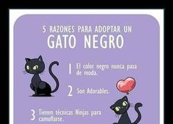Enlace a 5 razones para adoptar un gato negro