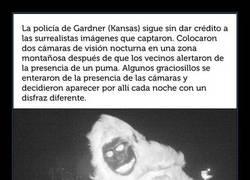 Enlace a Éstas son las surrealistas imágenes que captó la policía cuando buscaba un puma