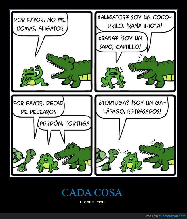 cocodrilo,rana,tortuga