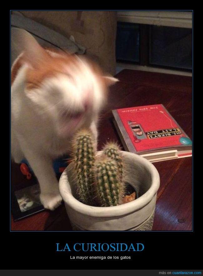 cactus,espinas,humor,jaja,wfail