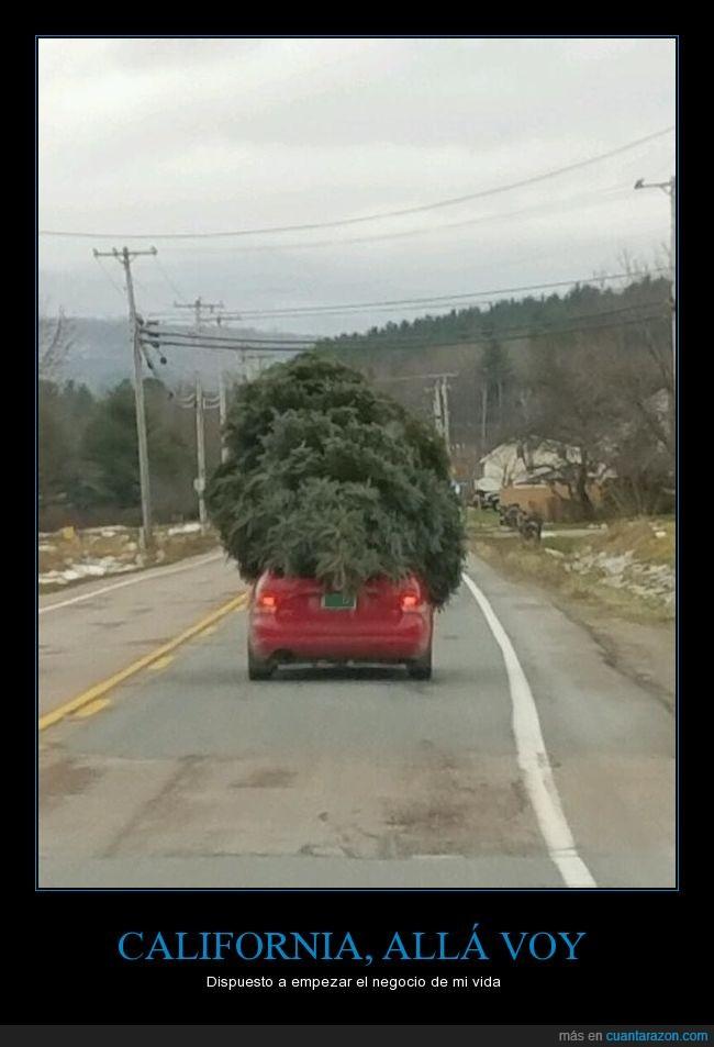 coche,marihuana,plantas