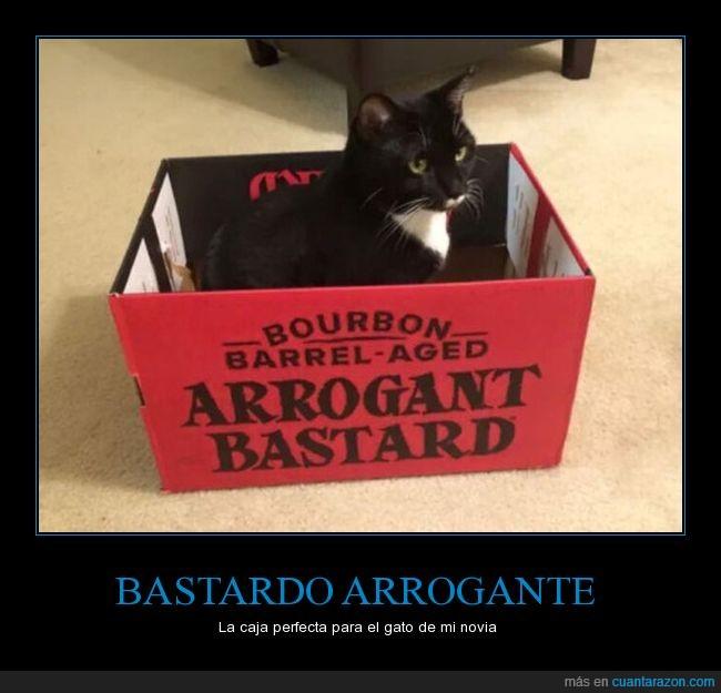 arrogante,caja,gato