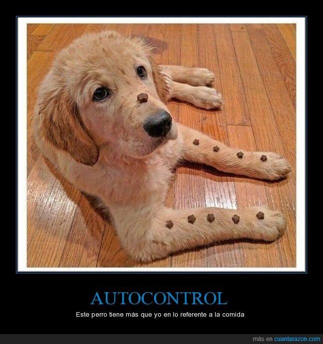 autocontrol,comida,entrenar,humor,jaja,perro