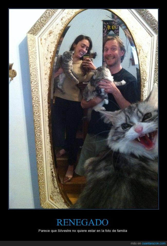 enojo,espejo,félido,felino,fotografía,gato