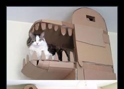 Enlace a Este humano construyó una casa de cartón en forma de dragón para complacer a su amo gatuno