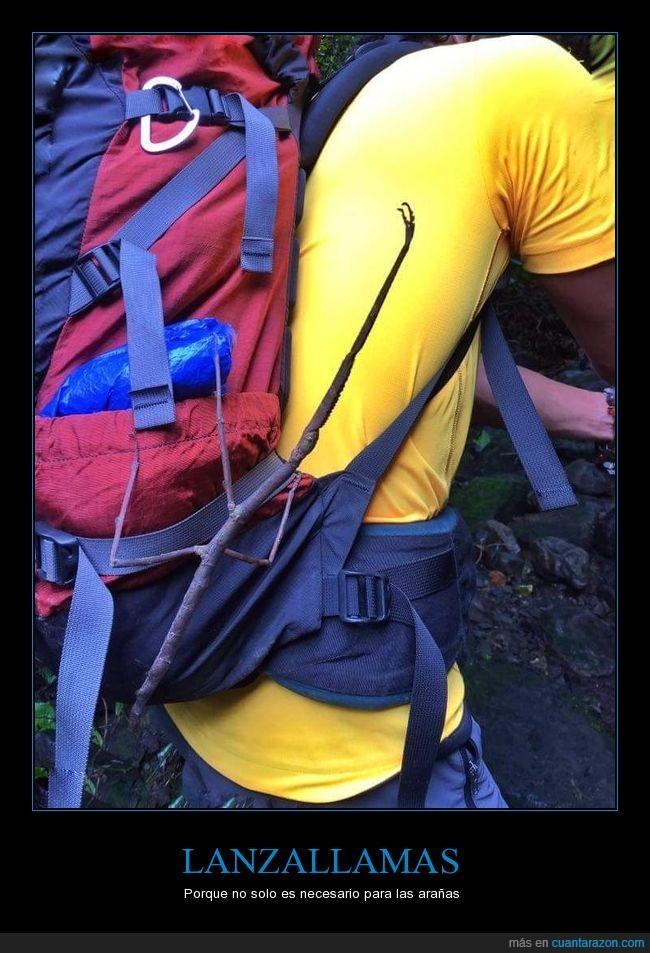 camping,insecto,insecto palo,senderismo