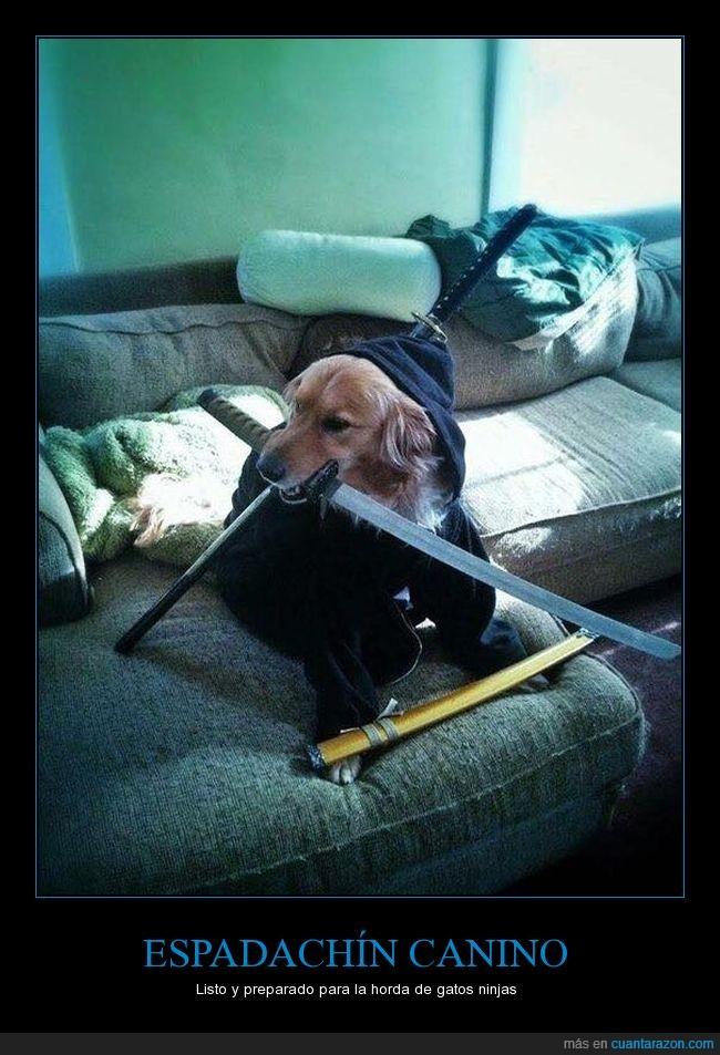 espada,espadachín,perro