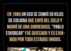 Enlace a Pablo Eskobear