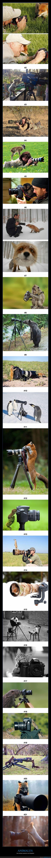 animales,cámara,fotografía